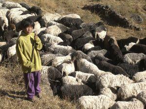 800px-Solaban_shepherd_boy
